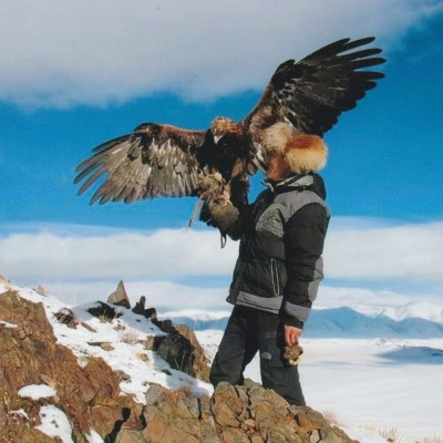 Hunt with Golden Eagle