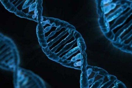 Хүүхэд генийн хувьд хэнийг дуурайдаг вэ?