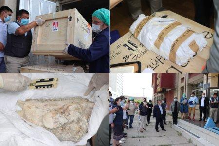 АНУ-аас палеонтологийн олдворуудыг эргүүлэн авчирлаа