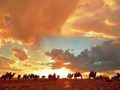 Gobi Desert & Central Mongolia - 11 days tour