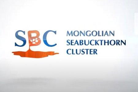 Mongolian seabuckthorn cluster