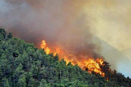 Өнгөрсөн жил нийслэлд 126 удаа хээрийн түймэр гарч, 59.7 га талбай шатжээ