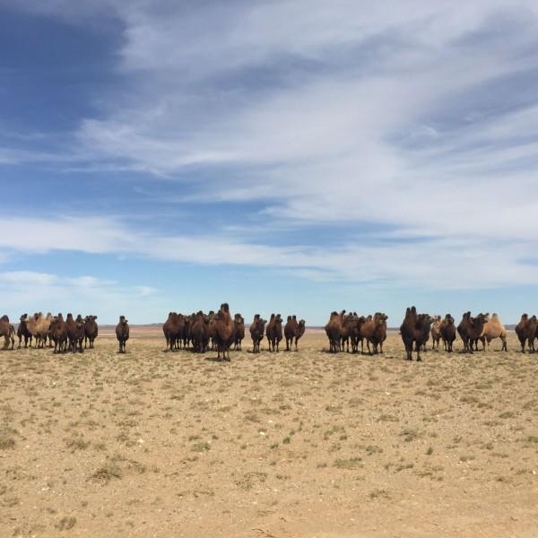 Gobi (Southern Mongolia)