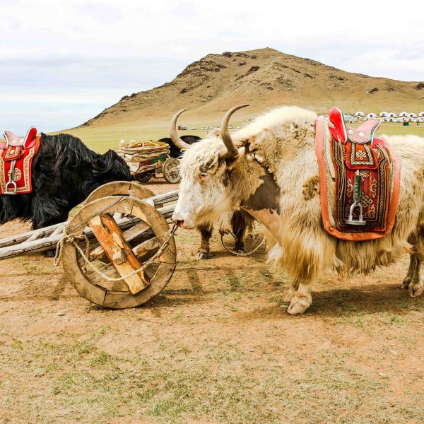 WONDERS OF MONGOLIA  <br> JUNE GROUP TOUR