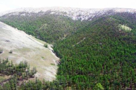 ЗГ: Ноён уул орчмын газрын тусгай хамгаалалтыг өргөтгөж, дархан цаазтай болгоно