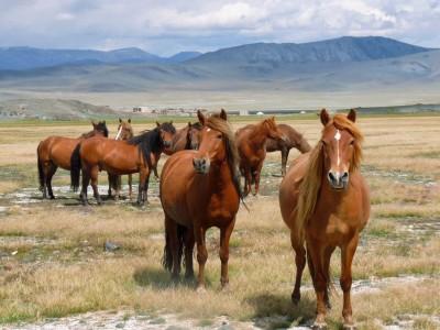Horse riding tour , Tolbo lake for 7days/ 6nights