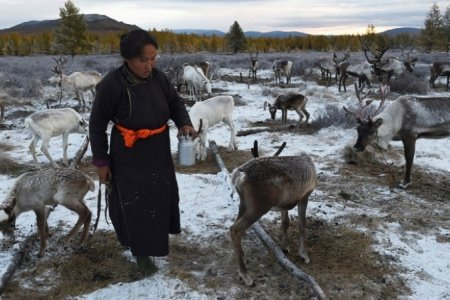 CNN: Монголын сүүлчийн цаатан түмэн