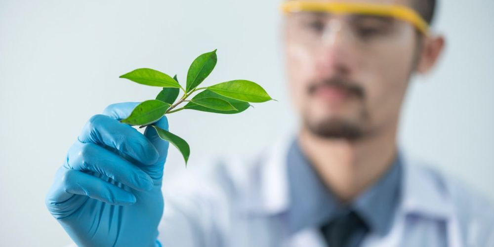 Сельское хозяйство и сельскохозяйственные науки