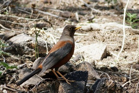 New species of birds discovered in 2020