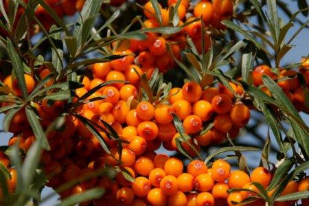 Жимс, жимсгэний үйлдвэрлэл
