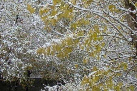 УЦУОШГ: 14-16-нд нутгийн зүүн хагаст бороо, нойтон цас орж, салхитай, сэрүүн байна