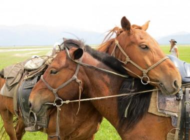 Arkhangay Horse Trek
