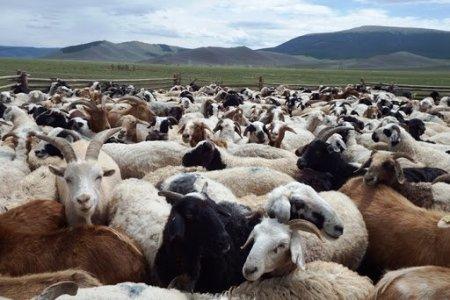 Монгол малын гаралтай бүтээгдэхүүний дэлхийн зах зээлд өрсөлдөх чадварыг нэмэгдүүлэхэд чиглэсэн стандарт батлагдлаа