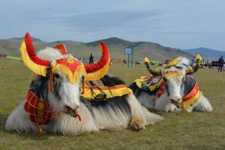 Монгол сарлаг дэлхийн брэнд болох цаг айсуй