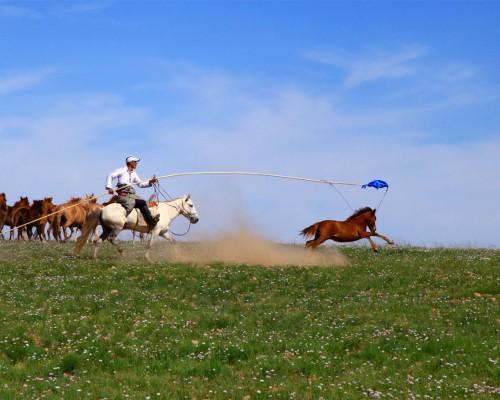 夏のモンゴル満喫ツアー(8日間)