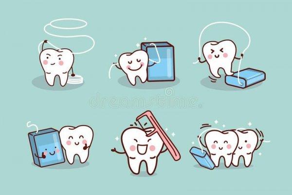 Шүдний утасны ач холбогдол