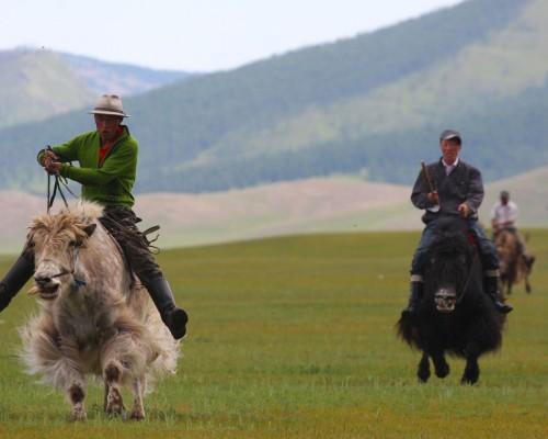 ヤクを放牧する人々と触れ合う旅(8日間)