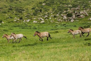 """Exploring World Heritage Site """"Orkhon Valley"""""""