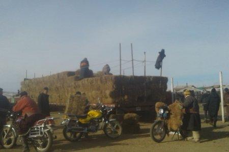 Сумын малчдад улсын нөөцөөс хивэг, өвс тарааж байна.