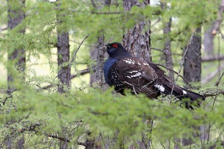 Birding in the birthplace of Genghis Khan