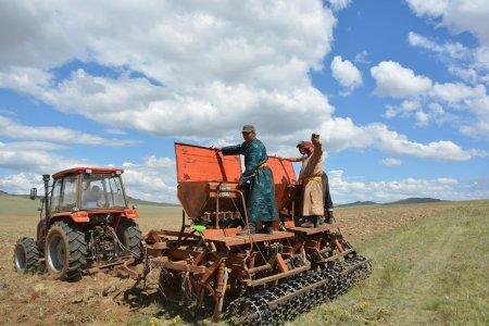 Асгат, Цэцэн-Уул сумын малчид ногоон тэжээл тариалж байна