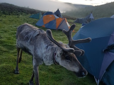 Tsaatan family, reindeer tour  for 9 days/ 8 nights