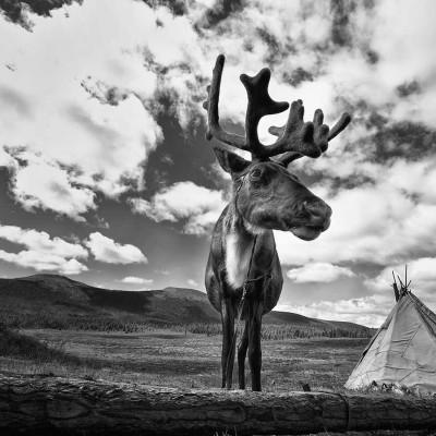 North (Tsaatan) & Central Mongolian tour