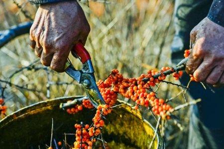 Жимс, жимсгэнэ тариалах технологийн сургалт