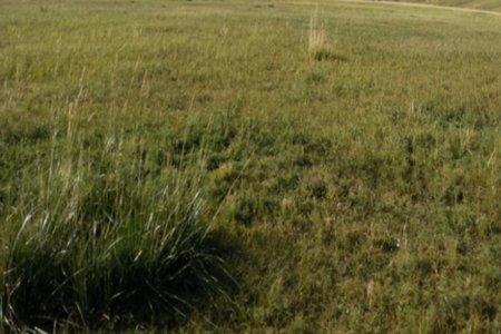 Монгол орны бэлчээрийн ургамлыг хэн сайн мэдэх вэ