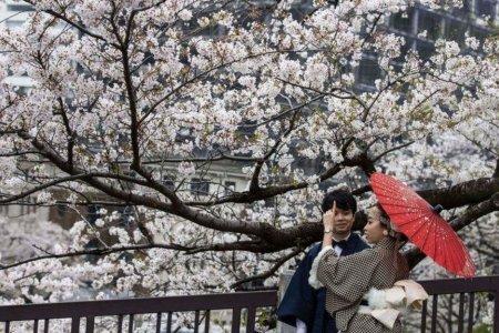 Сүүлийн 1,200 орчим жилийн түүхэнд Япон улсын интоорын модод хамгийн эрт цэцэглэжээ