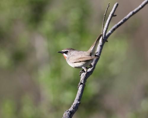 BIRDWATCHING TRIPS