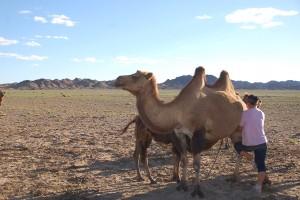 4 days' local flight & jeep tour to Gobi