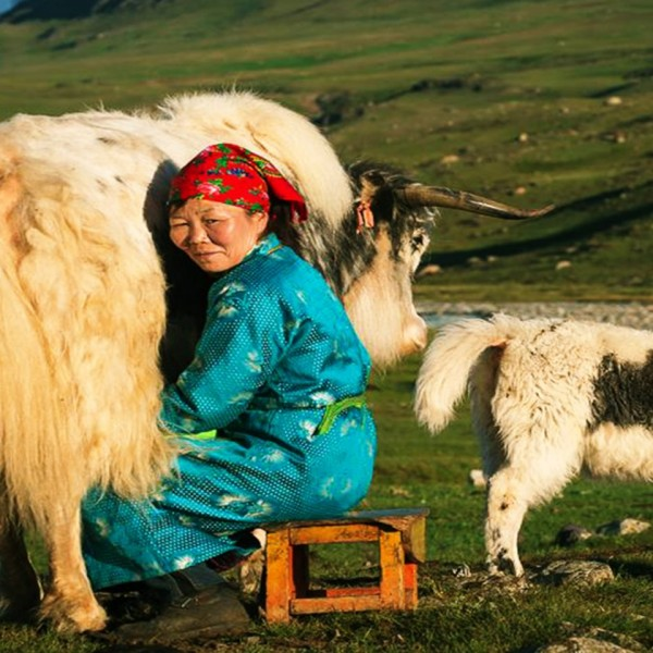 WONDERS OF MONGOLIA AUGUST GROUP TOUR  COPY