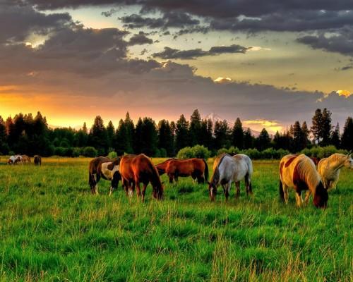 乗馬で訪ねるモンゴル大自然の旅(8日間)