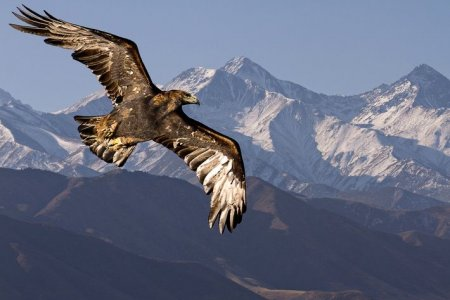 GOLDEN EAGLE HUNTING FESTIVAL