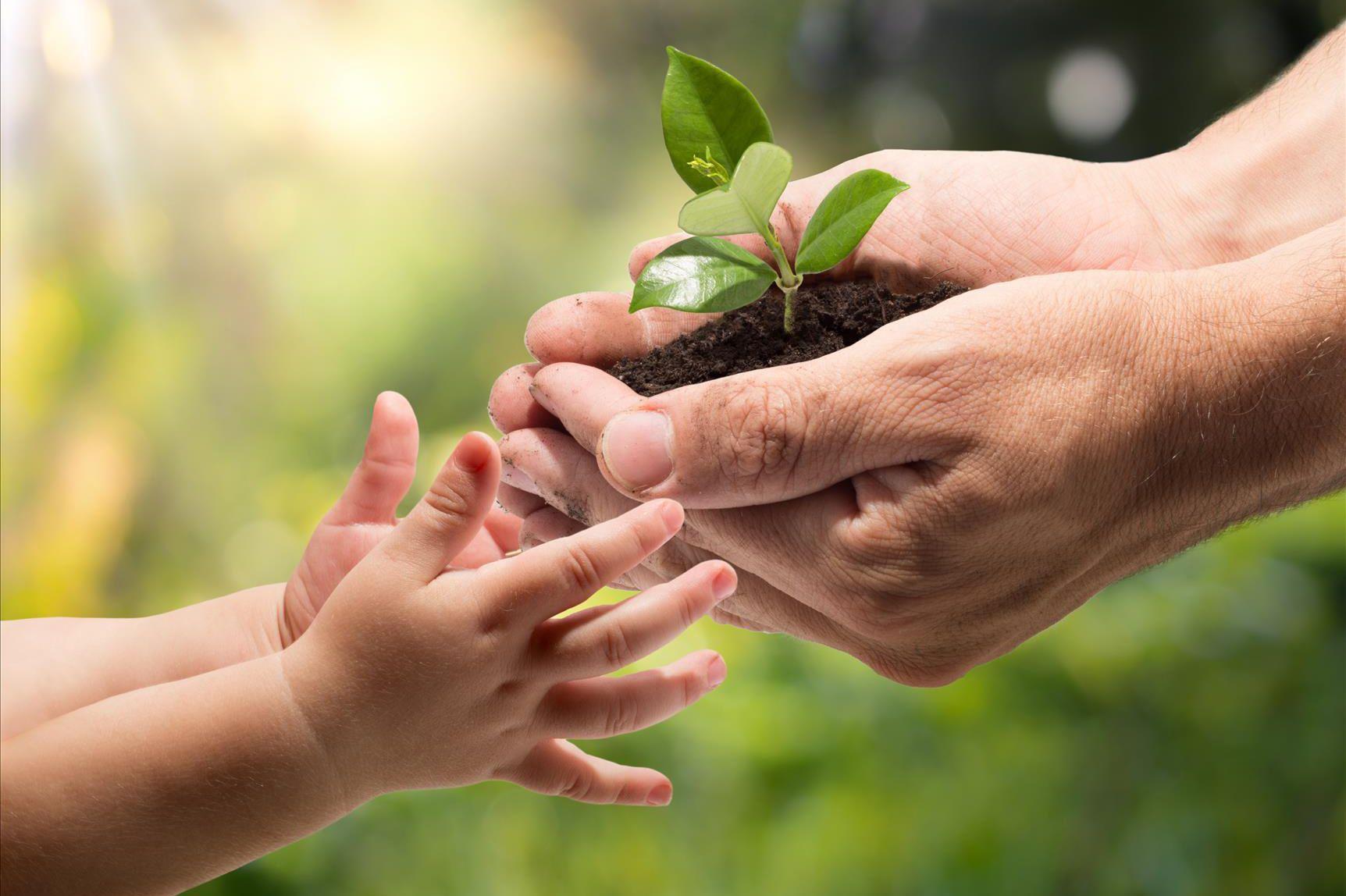 Эрүүл хөрс