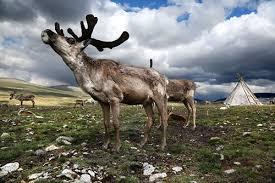 Сибирийн тэсгим хүйтэнд хүн төрөлхтөн хэрхэн аж төрж байгааг харуулсан гэрэл зургууд