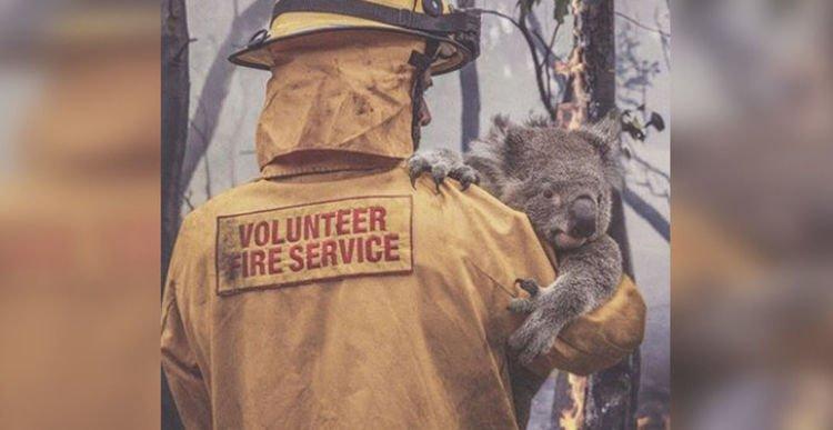 Австралийн түймрийн улмаас 24 хүн амиа алдаж, 500 сая орчим ан амьтан үрэгджээ