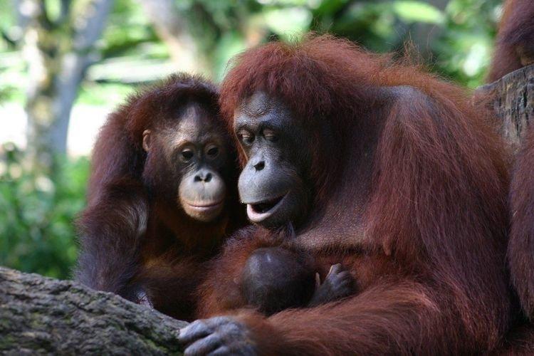 Сармагчингууд дуут болон дохио зангаа бүхий хэлээр ярилцдаг