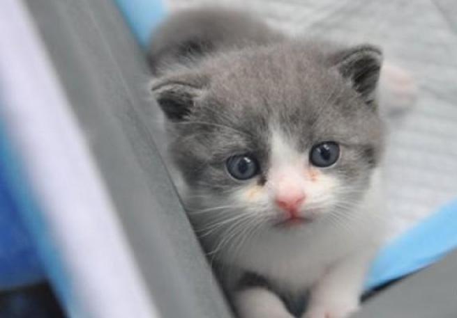 Эсийн аргаар хувилсан анхны муур