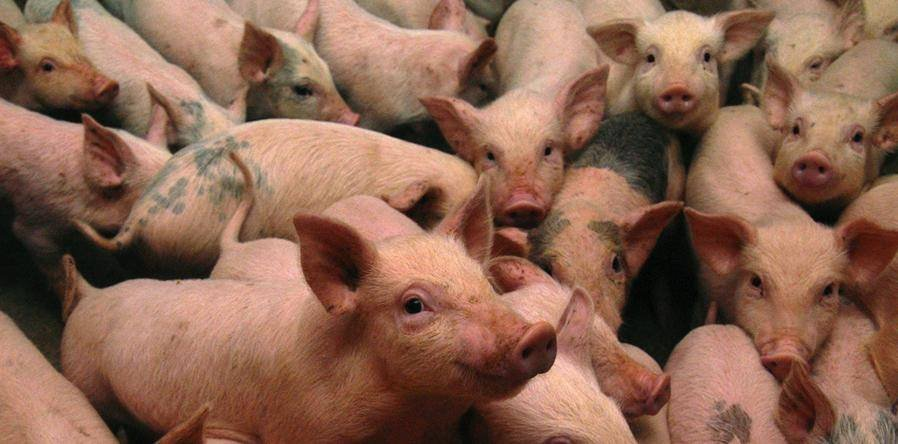 БНСУ амьтан, ургамлын гаралтай бүтээгдэхүүн хилээр нэвтрүүлэхийг хориглолоо