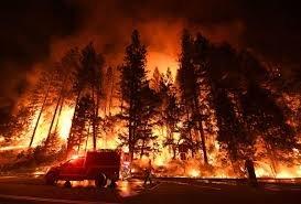Ану-ын Калифорни мужид гарсан ой хээрийн түймэр 93 мянган га талбайг хамраад байна