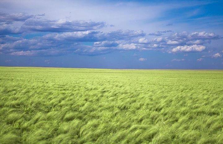 Монгол Улс дэлхийн дулааралд хэрхэн НӨЛӨӨЛДӨГ вэ?