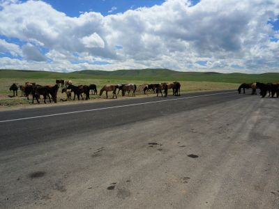 Horses crossing by