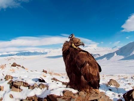 Fox Hunting in Mongolia