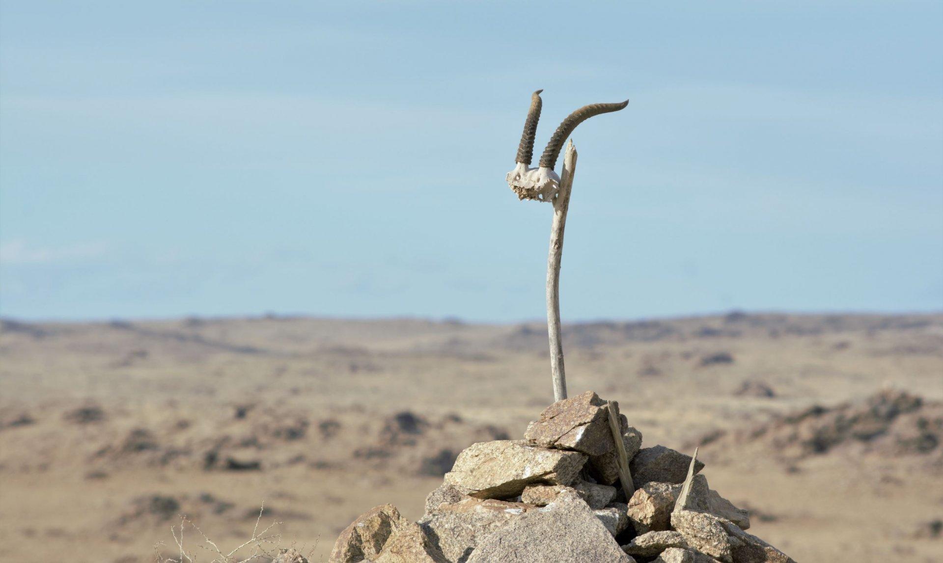 Trekking in western Mongolia