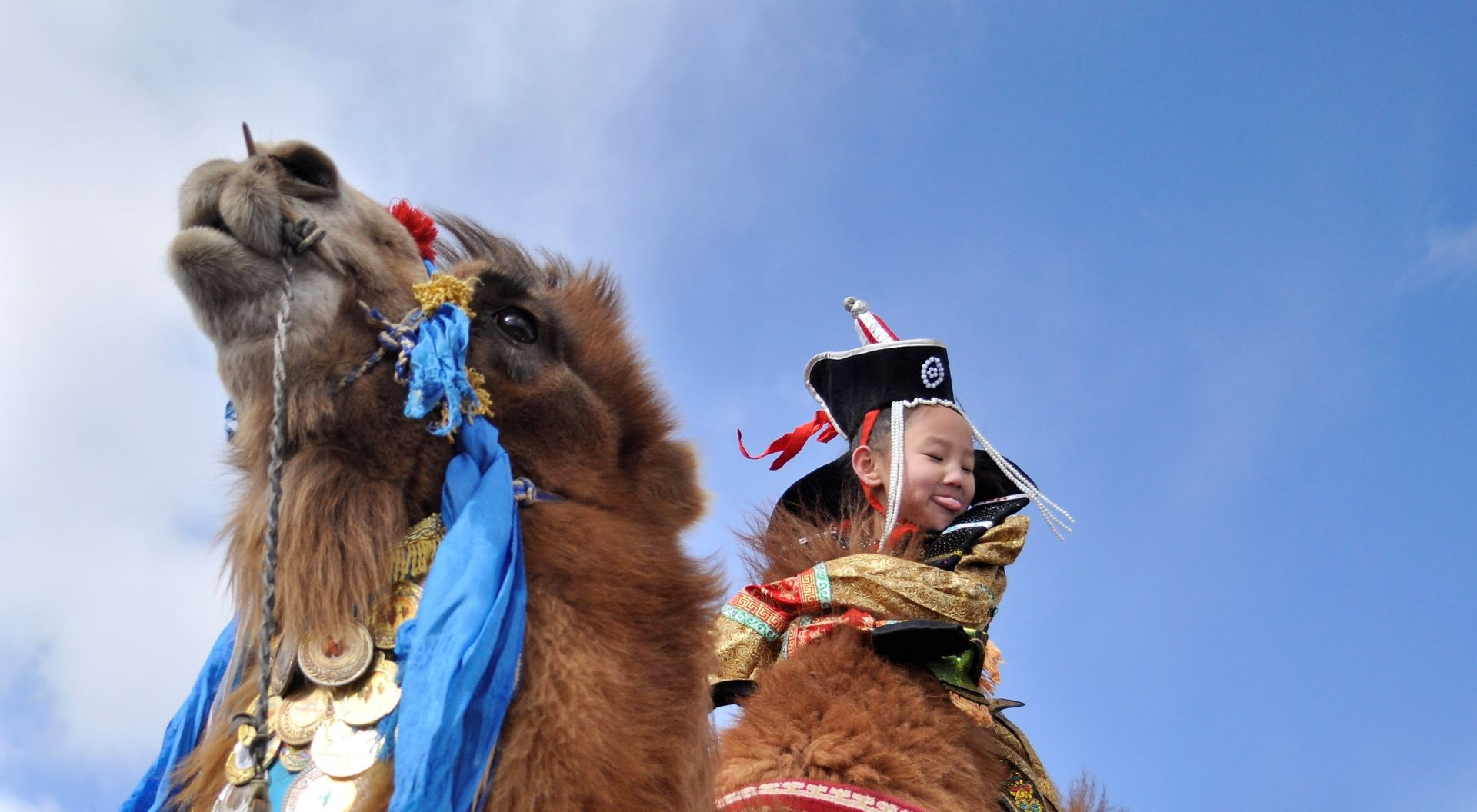 Two-humped camel riding