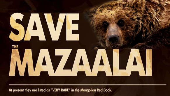 Gobi bear or Mazaalai