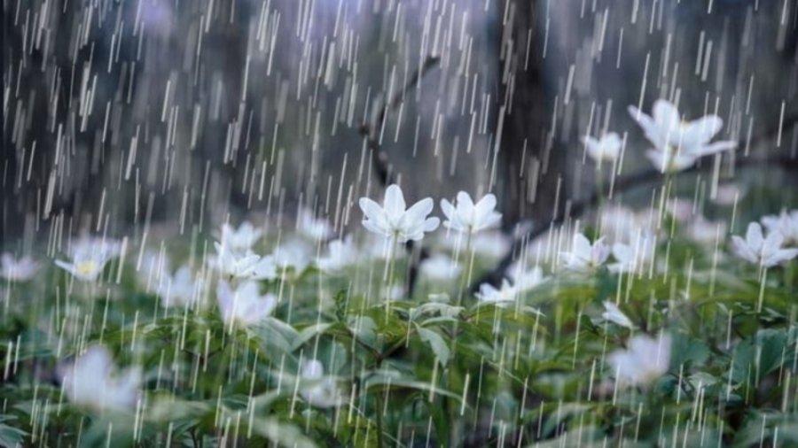 Борооны талаар сонирхолтой баримтууд