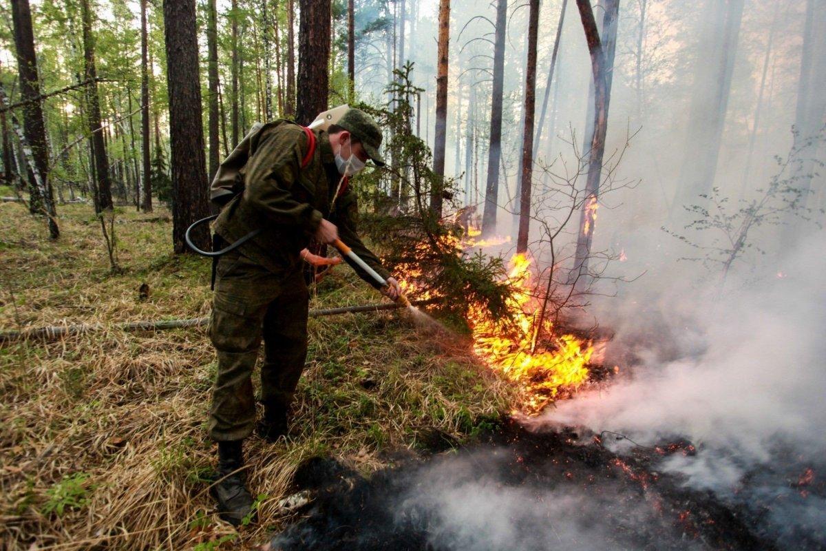 Сибирийн түймрийн талбайн хэмжээ багасчээ